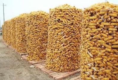 圈玉米网 电焊网 粮仓网