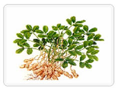 木犀草素Luteolin