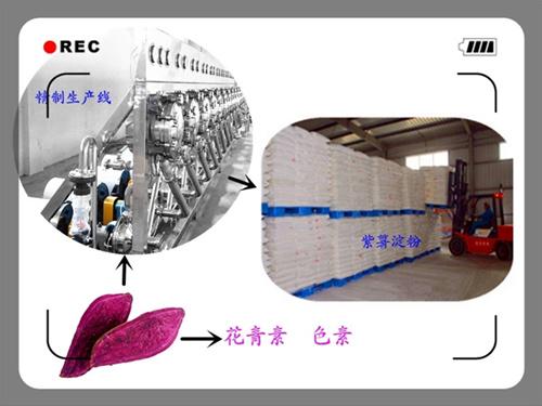 紫薯淀粉加工设备