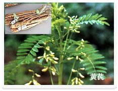 黄芪多糖Astragali Polusaccharoses