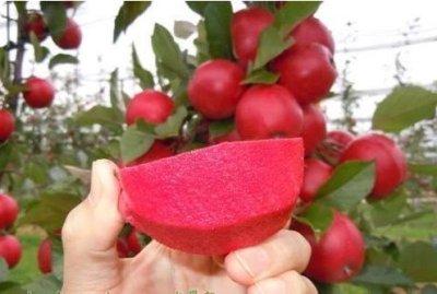 量大优惠 种子 :苹果种子,核桃种子,樱桃种子,花椒种子,海棠种子,杜梨