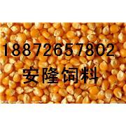 大量收购:玉米,高梁,大豆,棉粕,大米