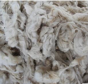 内蒙古羊毛 纯天然牧场 绵羊洗净毛 绵羊毛原毛 绵羊毛绒批发