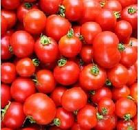 南京供应98%番茄红素90%