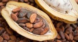 非洲进口可可豆