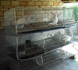 獭兔笼,肉兔笼,兔笼,养殖笼