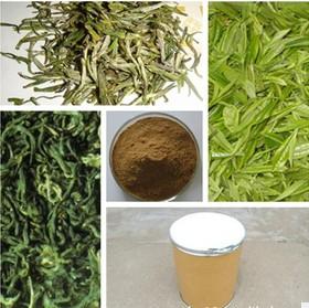 绿茶提取物 绿茶比例提取物