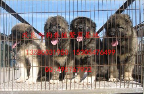 养殖肉狗价格