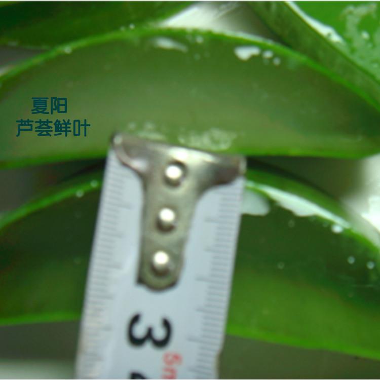 江夏芦荟粘度佳  自制芦荟汤品 通便润肠
