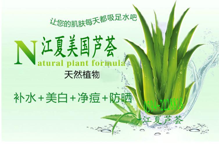 绿色有机芦荟烘干叶  100%满意优质芦荟原料