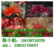 深圳化验矿石成分检测//岩石成分检测机构