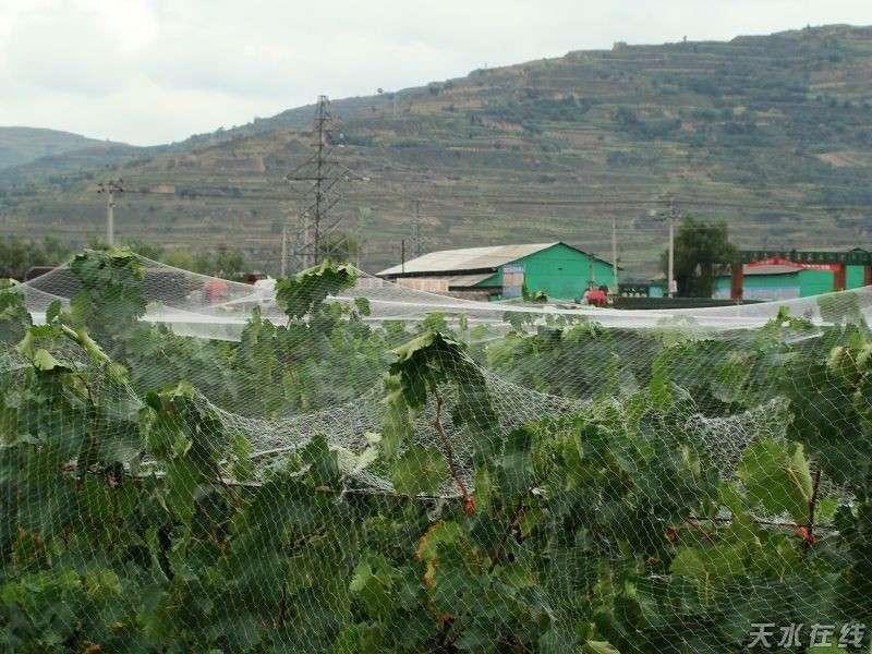 果树防鸟网 樱桃网 防鸟网价格      葡萄网