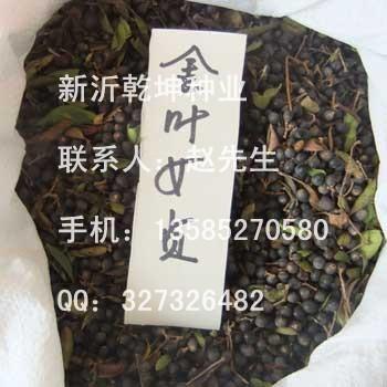 苗木类种子公司的形象照片