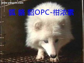 养殖狐狸貉子饲料添加剂促长剂