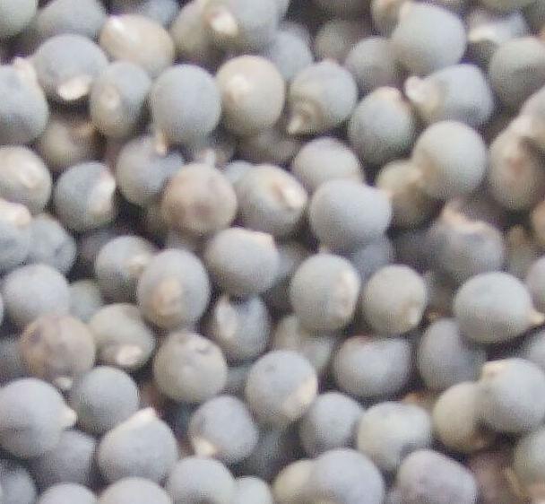 杨贵妃秋葵种子保健蔬菜籽