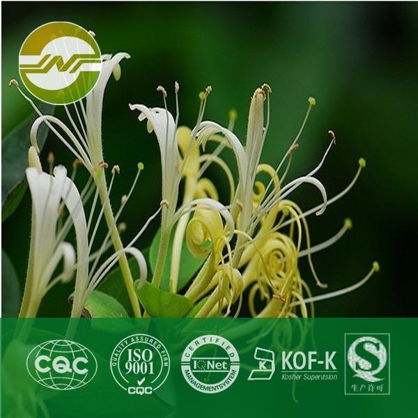 金银花提取物绿原酸10%