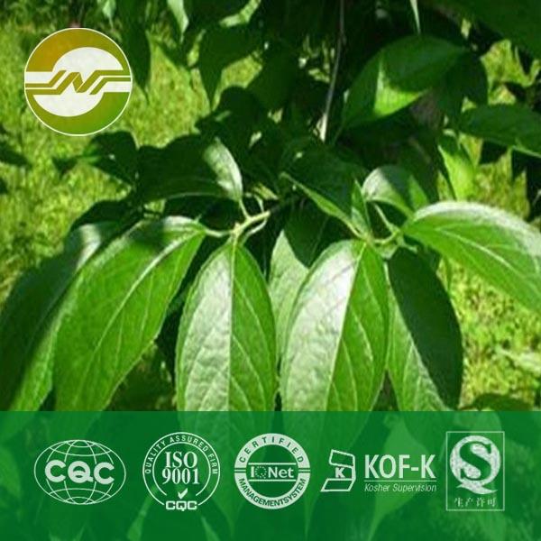 绿原酸98%,HPLC