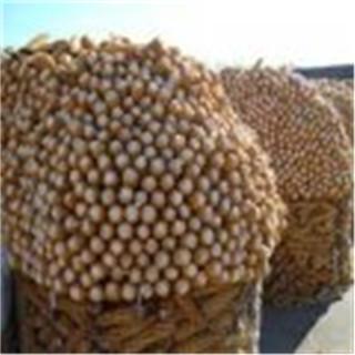 晾晒玉米铁丝网