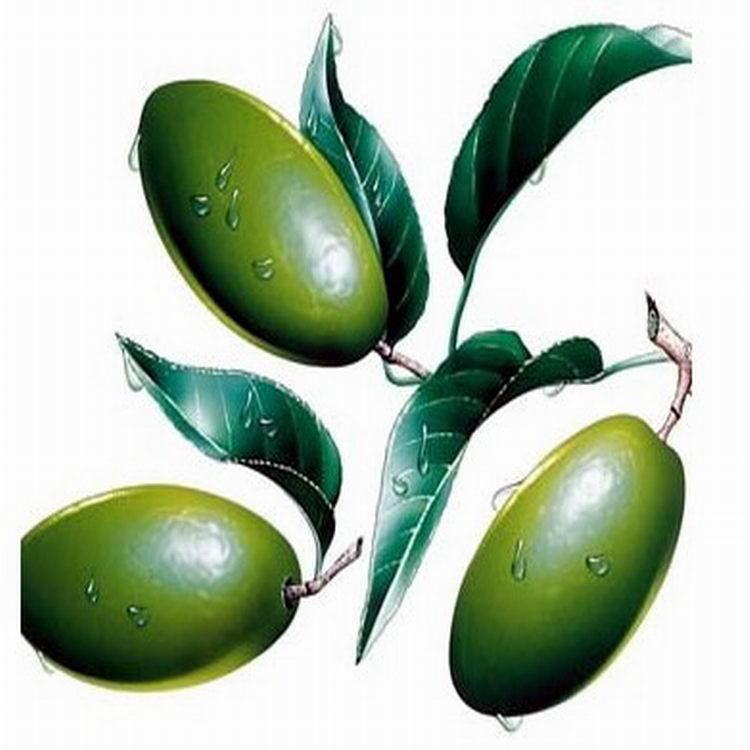 厂家(西安昌岳)供应 20%橄榄叶提取物