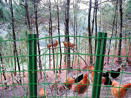散养鸡用什么围网