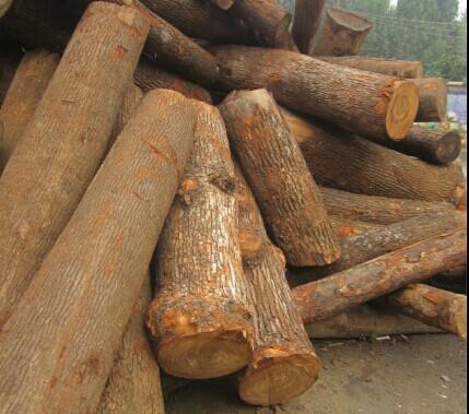 郓城启林木业有限公司大量出售核桃木,水黄杨,枣木板,梨木,杨木,法桐