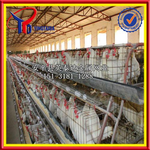产蛋鸡笼 蛋鸡笼养设备 阶梯型蛋鸡笼