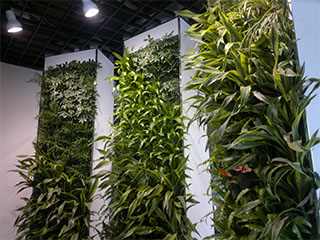 3D立体绿化的好处,科学墙体绿化前景