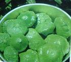 保健蔬菜种子绿元宝扇贝西葫芦种子