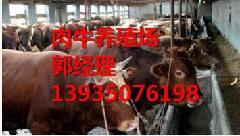 山西牛犊价格