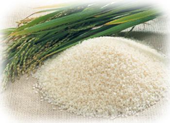 求购玉米,大米,高粱,糯米,小麦等