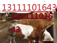 出售西门塔尔牛