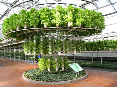 温室无土栽培的技术关键