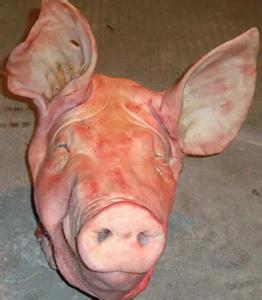 批发皇冠猪头