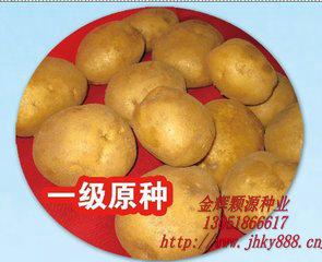 荷兰15土豆种