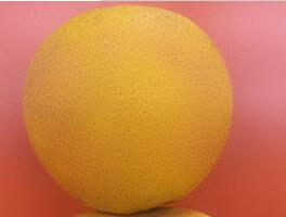 批发新鲜有机洞庭胡柚 清热去火润肺止咳小柚子农家原生态