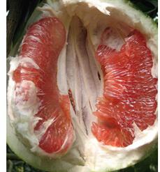 产地直发 低价批发水果 产自湖南洞庭之畔 红心柚