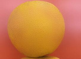 低价批发水果胡柚