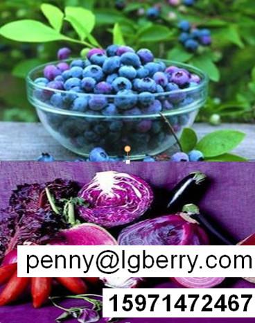 蓝莓酵素粉