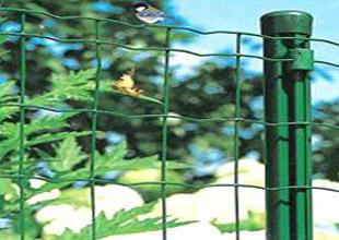 我厂供应现货荷兰网养殖用荷兰网pvc丝绿色铁丝网养鸡网