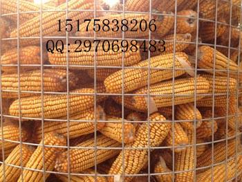 圈玉米电焊网网、粮仓网、晾晒玉米网 价格优惠 欢迎来电
