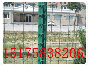 箭腾金属直销PVC养殖荷兰网、养鸡网、电焊网厂家