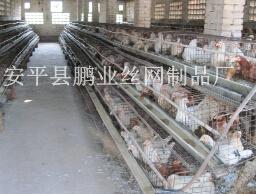 蛋鸡养殖笼具