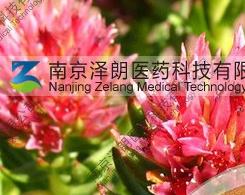 红景天提取物/红景天苷工厂专业生产纯天然