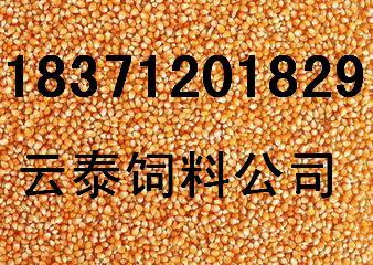 饲料厂收购玉米