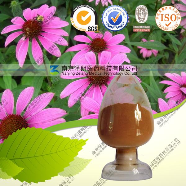 紫锥菊提取物  厂家专业生产 QS认证