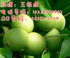 遂宁香玲核桃树,香玲产量高,优良核桃苗,核桃苗品种