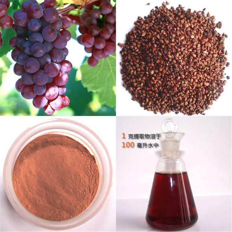 现货热销 天然抗氧化、医药保健原料 葡萄籽提取物