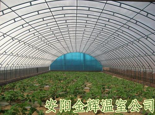 安阳蔬菜大棚骨架/钢结构温室大棚/安阳金辉温室公司