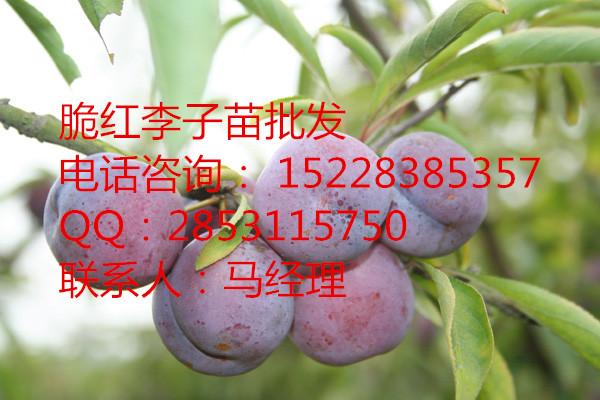 四川李子的食用价值,李子的养生功效,李子苗的分布