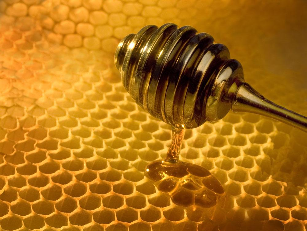 宁波港蜂蜜进口报关清关手续办理